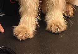 nagels_knippen_hond_2