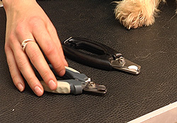 nagels_knippen_hond_4