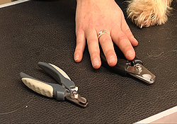nagels_knippen_hond_5